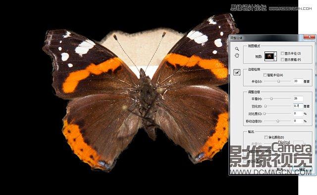 陈列于画框里的蝴蝶标本